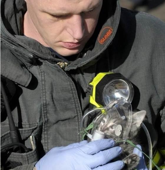 Brandweerman geeft extra zuurstof aan een poesje