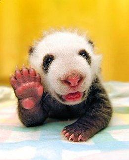 Hi folks...! (pandaatje)-1