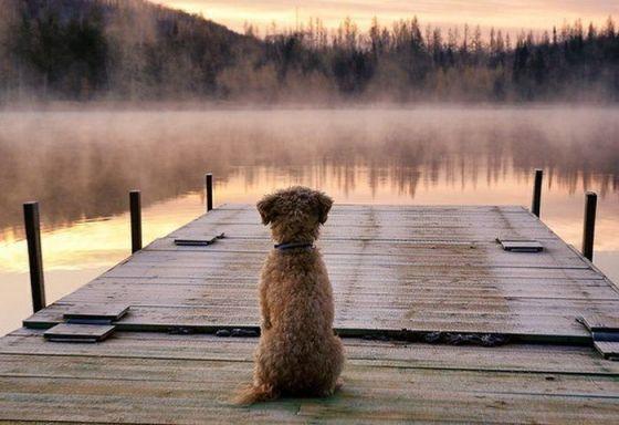 hond en de mist