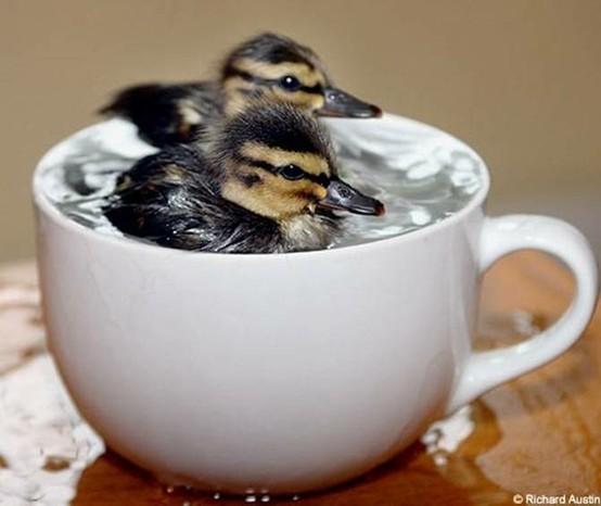 Te klein zwemwater...!-1
