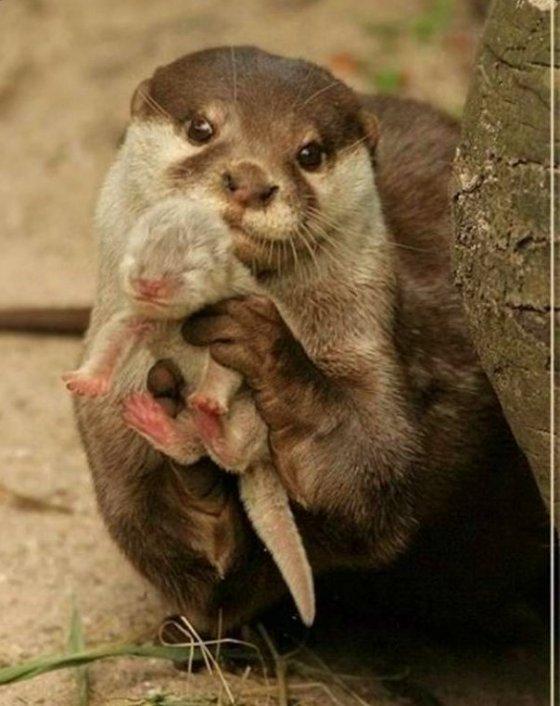 Trotse ottermoeder showt haar baby...!-1
