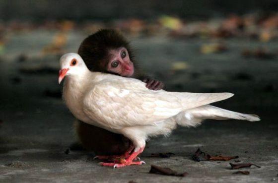 aap en duif-001