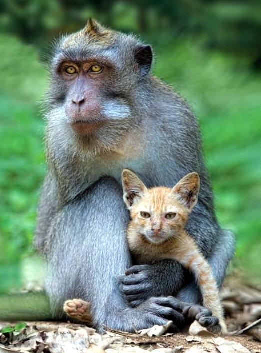 aap en poes