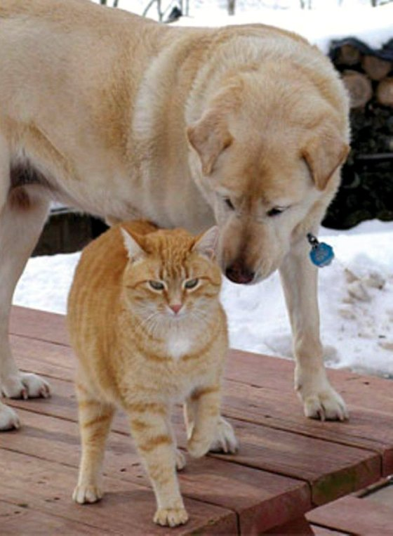 blinde hond en geleide kat