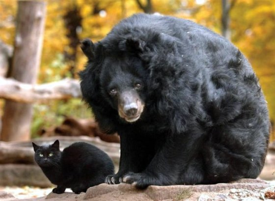 kat en beer