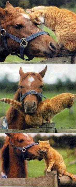 paard en kat