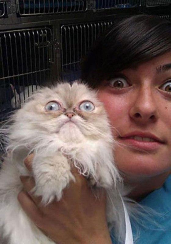 funny-scared-animals-vet-surprised