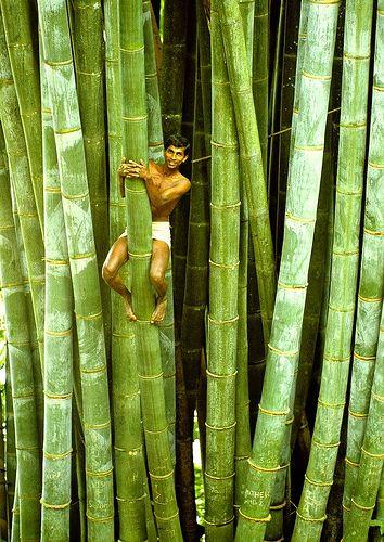 Bamboo-Trees.-Sri-Lanka