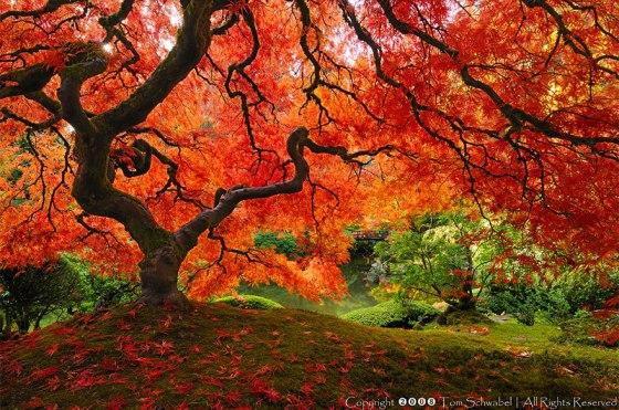 trees-by-Tom-Schwabel