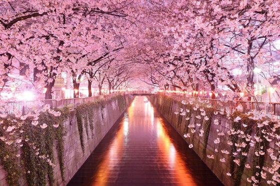 trees-Sikura-tunnel-Japan-okera-japan
