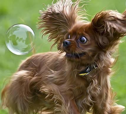 hondje-met-zeepbel